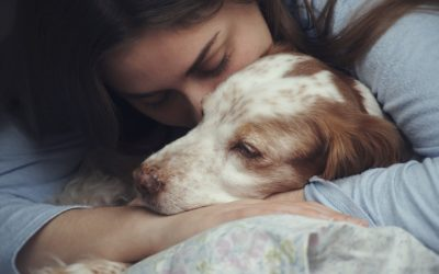 Pets: the hidden weapon of domestic abuse